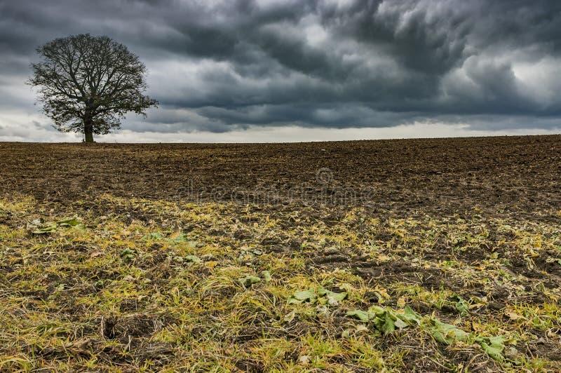 Ensamt träd på ett fält royaltyfri bild