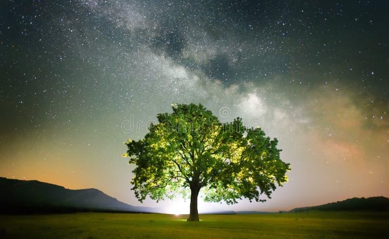 Ensamt träd på fält under galax för mjölkaktig väg arkivbild