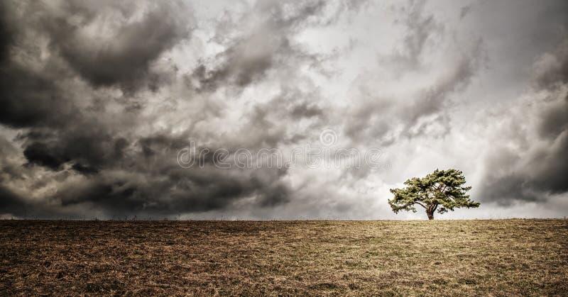 Ensamt träd på horisont arkivfoton