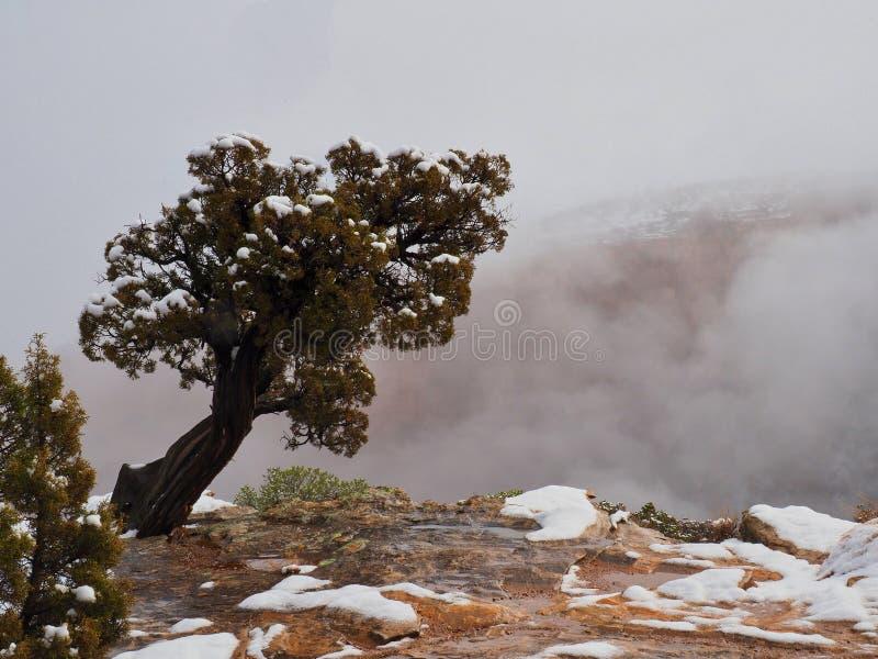 Ensamt träd på kanten av kanjonen royaltyfria foton