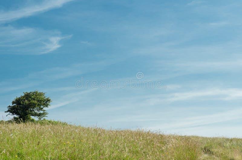 Ensamt träd på kullen royaltyfria foton