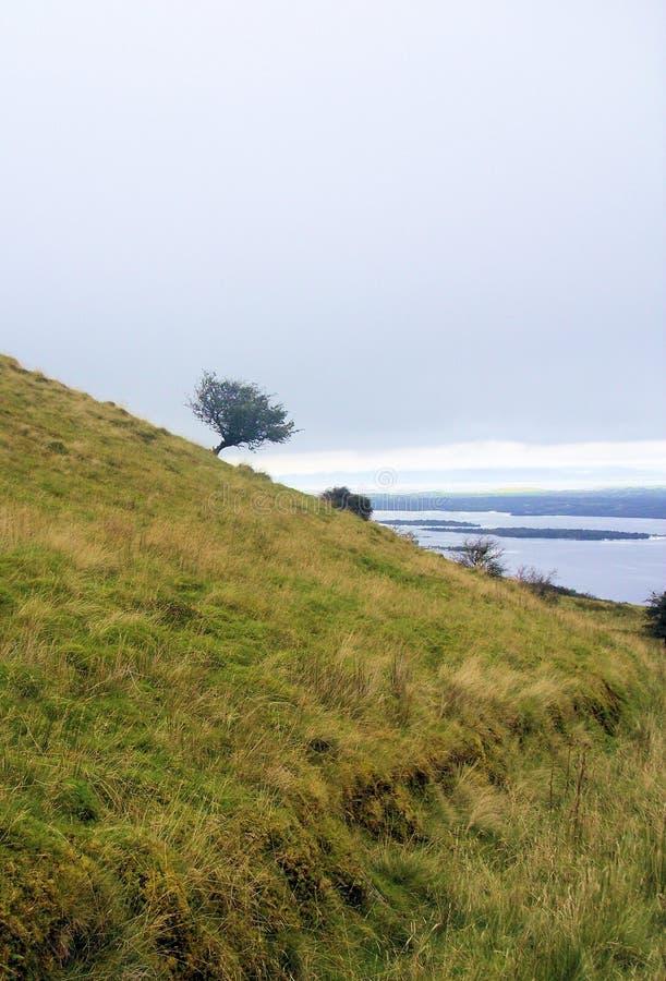 Ensamt träd på lutningen av berget royaltyfria foton