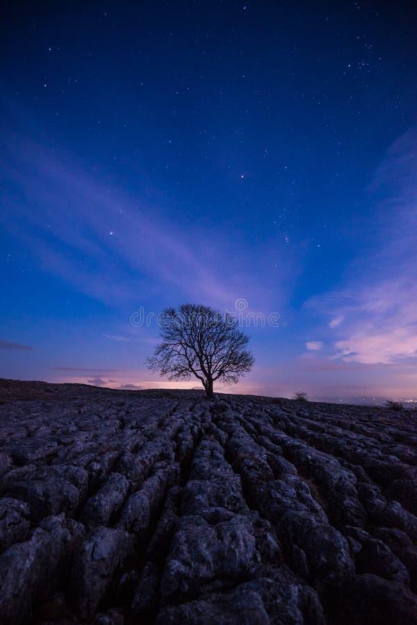 Ensamt träd på Malham vid natt royaltyfri bild