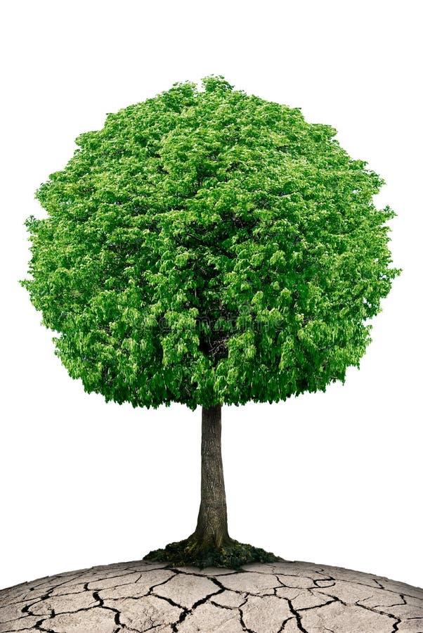 Ensamt träd på planeten som knäckas som isoleras på en vit bakgrund royaltyfria foton