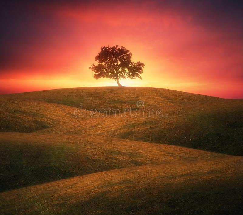 Ensamt träd på Rolling Hills royaltyfri fotografi