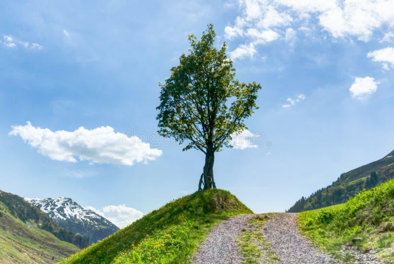 Ensamt träd på sidan av en gruslandsgränd med blå himmel och moutainlandskap bakom royaltyfria foton