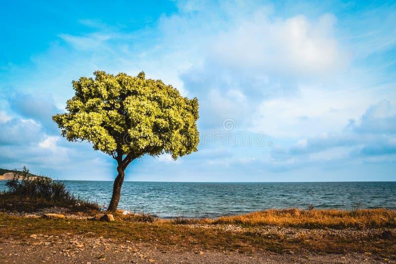 Ensamt träd på sjösidan royaltyfri fotografi