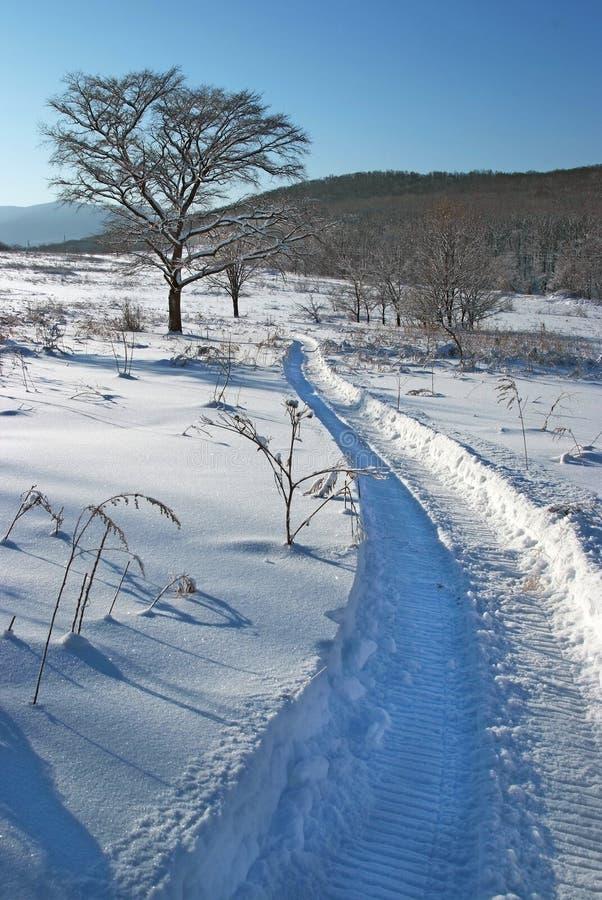 Ensamt träd på snöfältet arkivfoton