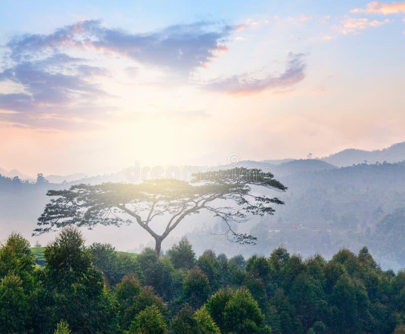 Ensamt träd på soluppgång i kullar royaltyfria foton