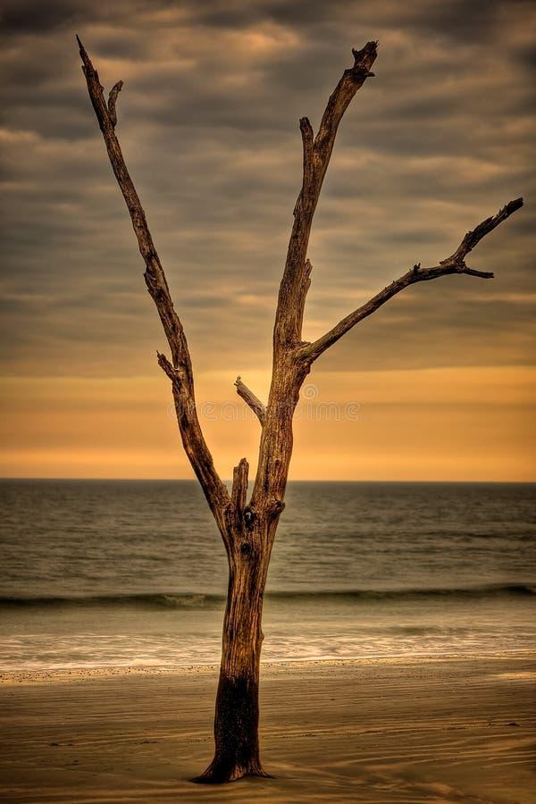 Ensamt träd på stranden på solnedgången royaltyfria bilder