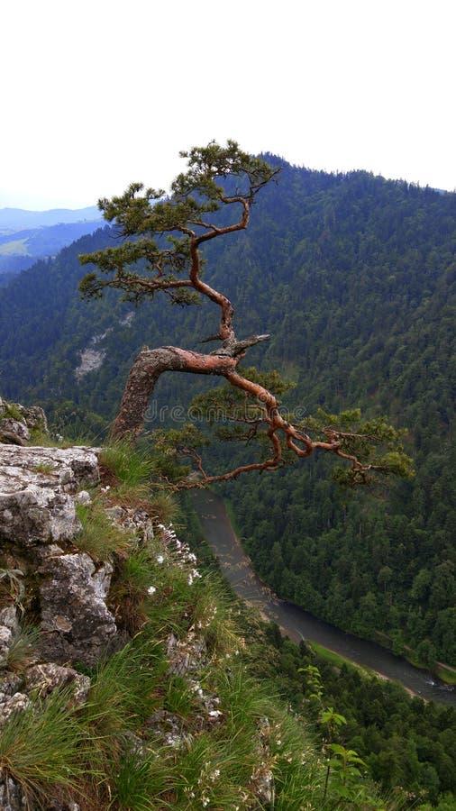 Ensamt träd på vagga arkivfoton