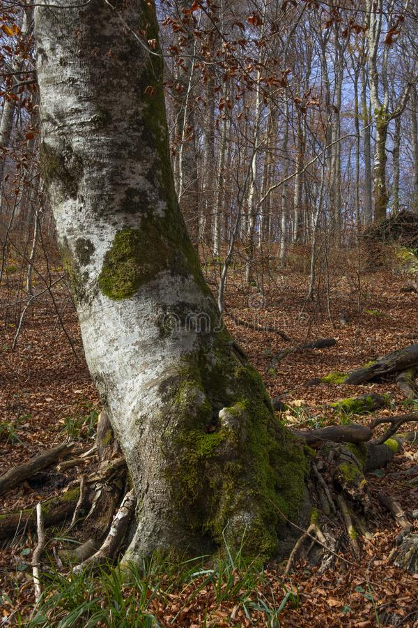 Ensamt träd, Plitvice fotografering för bildbyråer