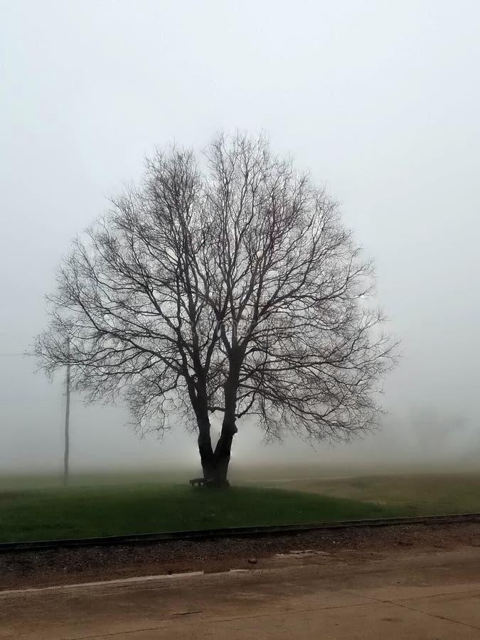 Ensamt träd som är naket i djupet av vintern på en dimmig dag fotografering för bildbyråer