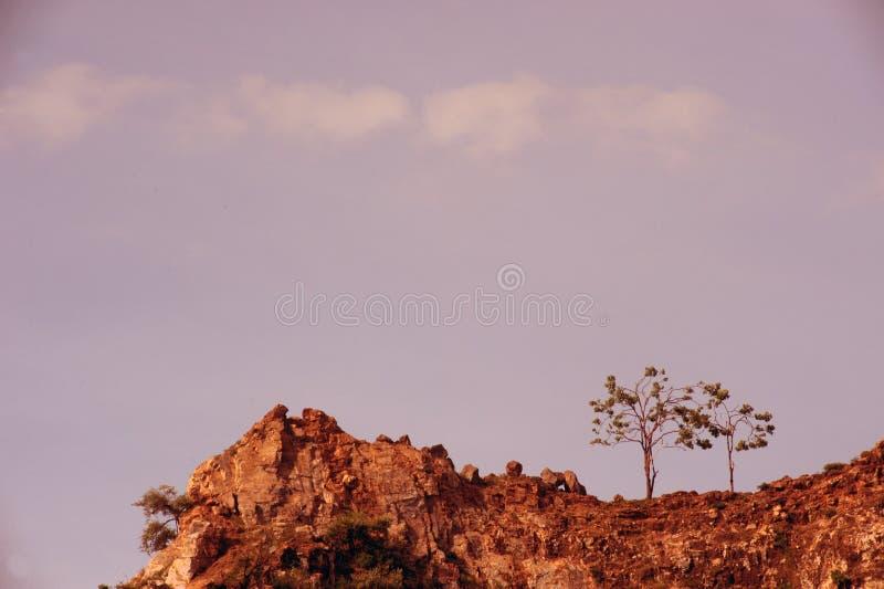 Ensamt träd som överst växer av vaggaberget royaltyfri bild