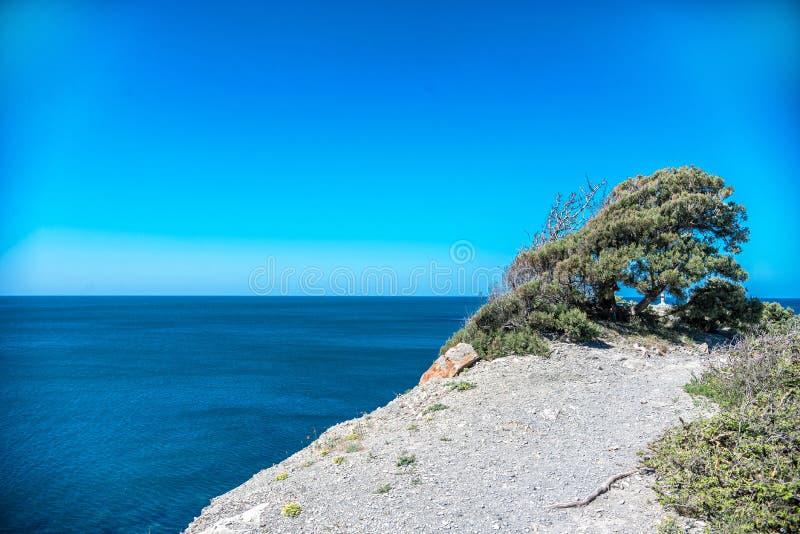 Ensamt träd som växer på en vagga mot havet fotografering för bildbyråer