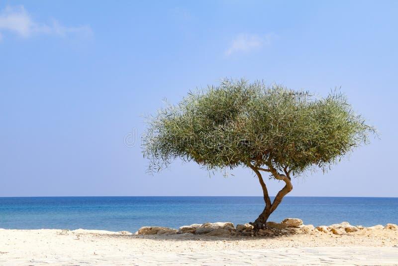 Ensamt tr?d bredvid havet p? solig dag med bl? himmel arkivfoto