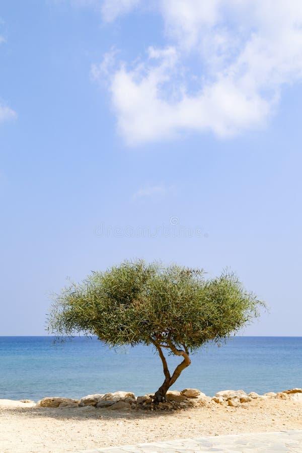 Ensamt tr?d bredvid havet p? solig dag med bl? himmel fotografering för bildbyråer