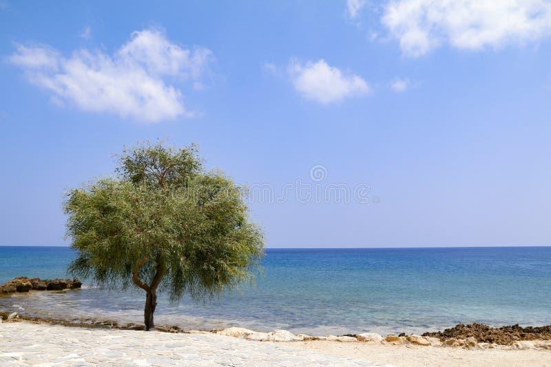 Ensamt tr?d bredvid havet p? solig dag med bl? himmel arkivbild