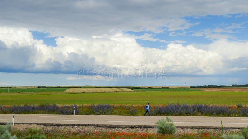 Ensamt vallfärda att gå mellan vete och vallmofält längs gå av St James också som är bekant som Camino de Santiago royaltyfri foto