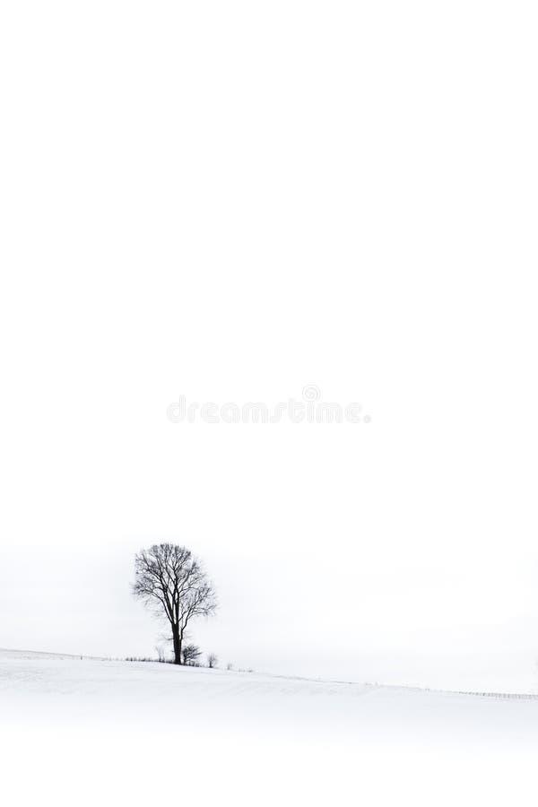Ensamt vinterträd arkivbilder