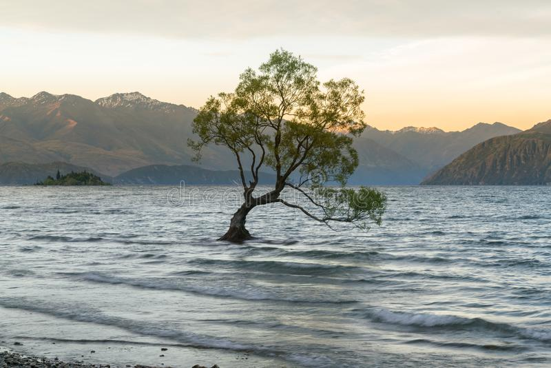 Ensamt Wanaka träd i vattensjön, Nya Zeeland fotografering för bildbyråer