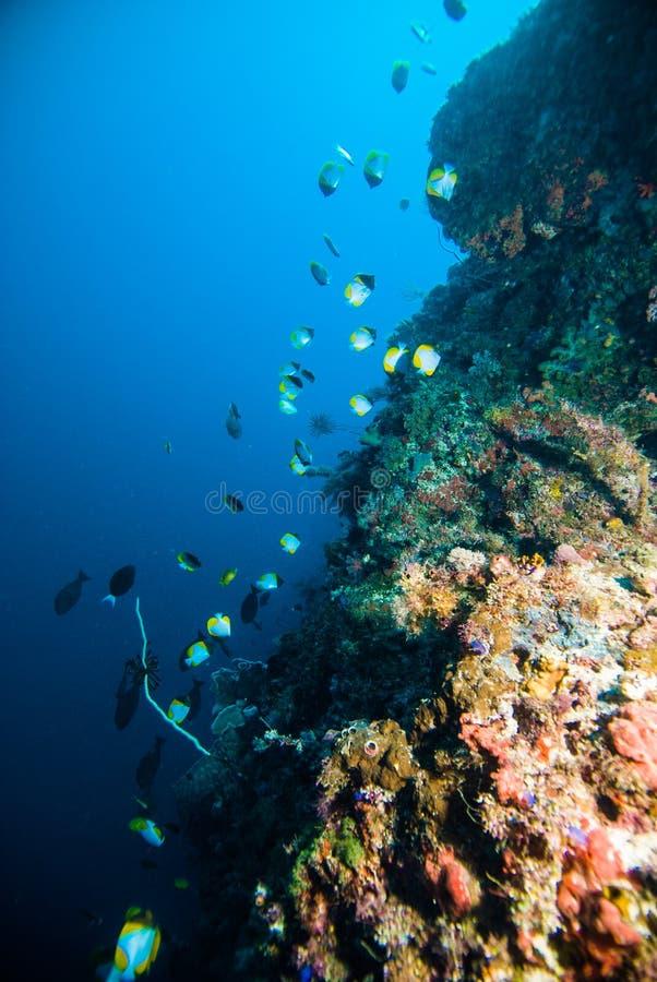 Enseñar pescados sobre el kapoposang Indonesia del buceador del buceo con escafandra del coral foto de archivo libre de regalías