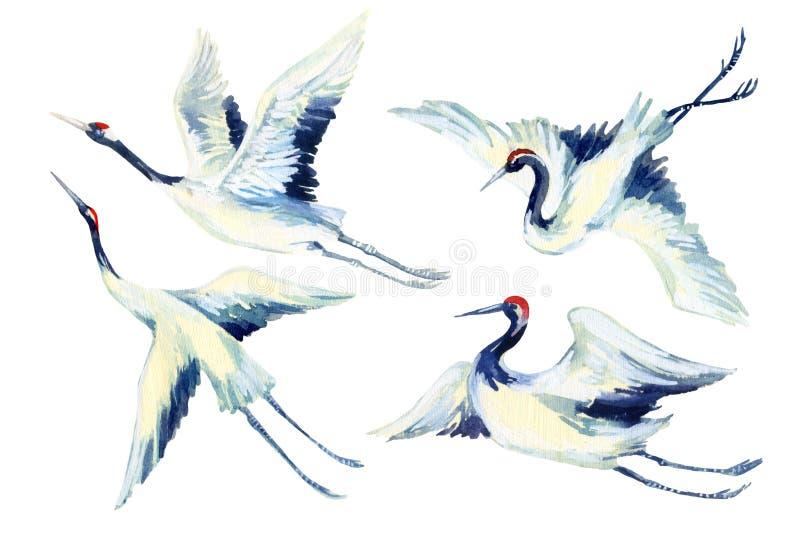 Ensemble asiatique d'oiseau de grue d'aquarelle illustration stock