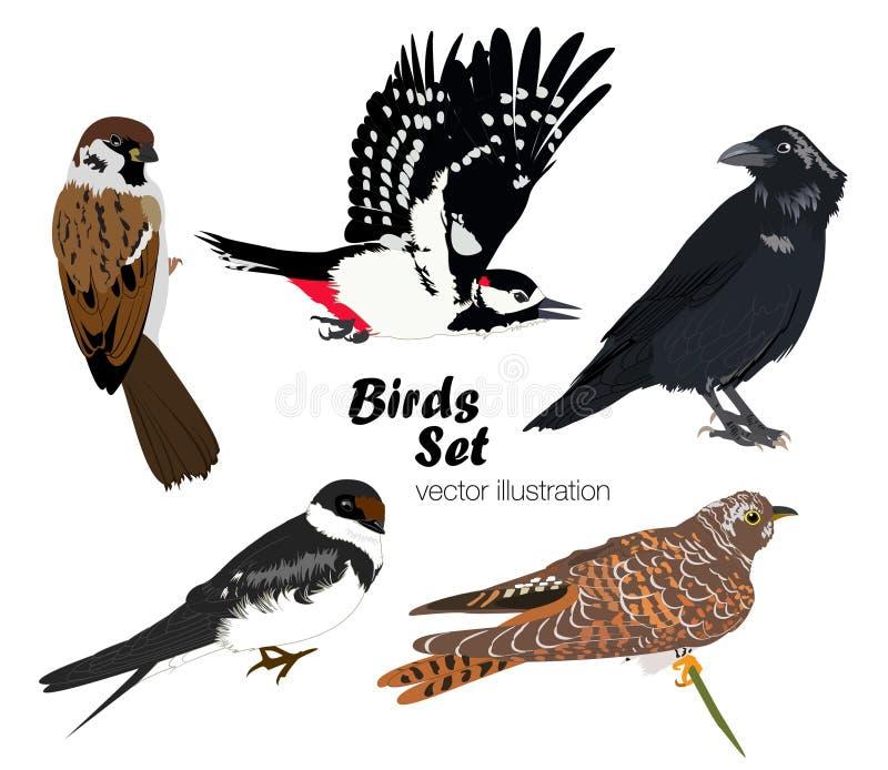 Ensemble coloré d'oiseaux Illustration de vecteur illustration de vecteur