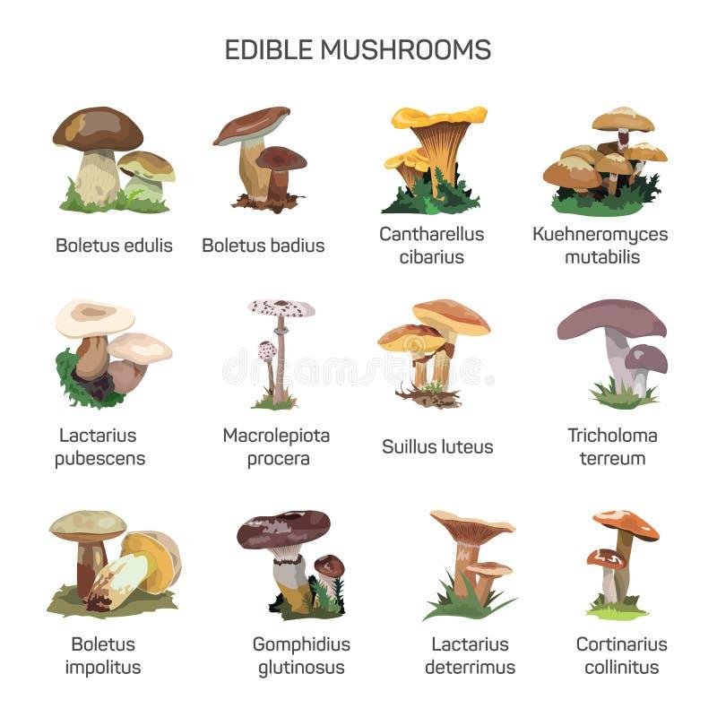 Ensemble comestible de vecteur de champignons d'icônes d'isolement sur le fond blanc illustration de vecteur