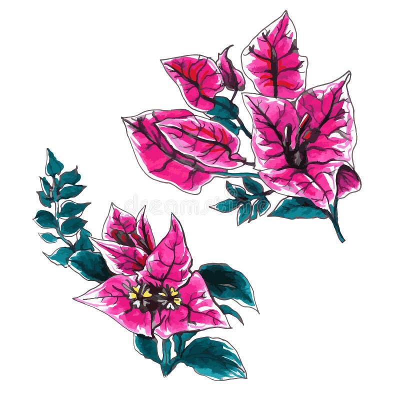 Ensemble décoratif de fleur de bouganvillée illustration stock
