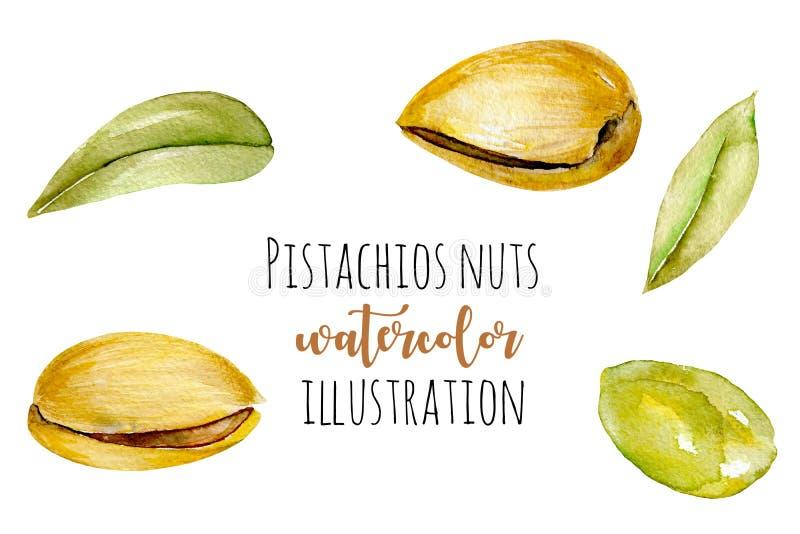 Ensemble d'éléments de pistaches d'aquarelle illustration libre de droits