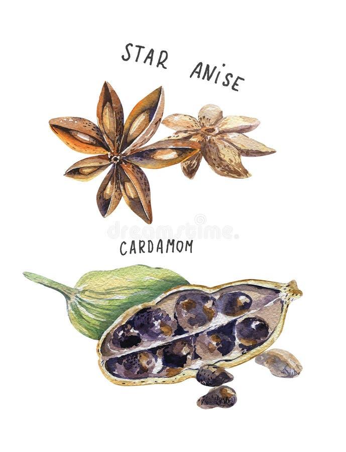 Ensemble d'épice, dessinant par l'aquarelle, illustration tirée par la main images stock