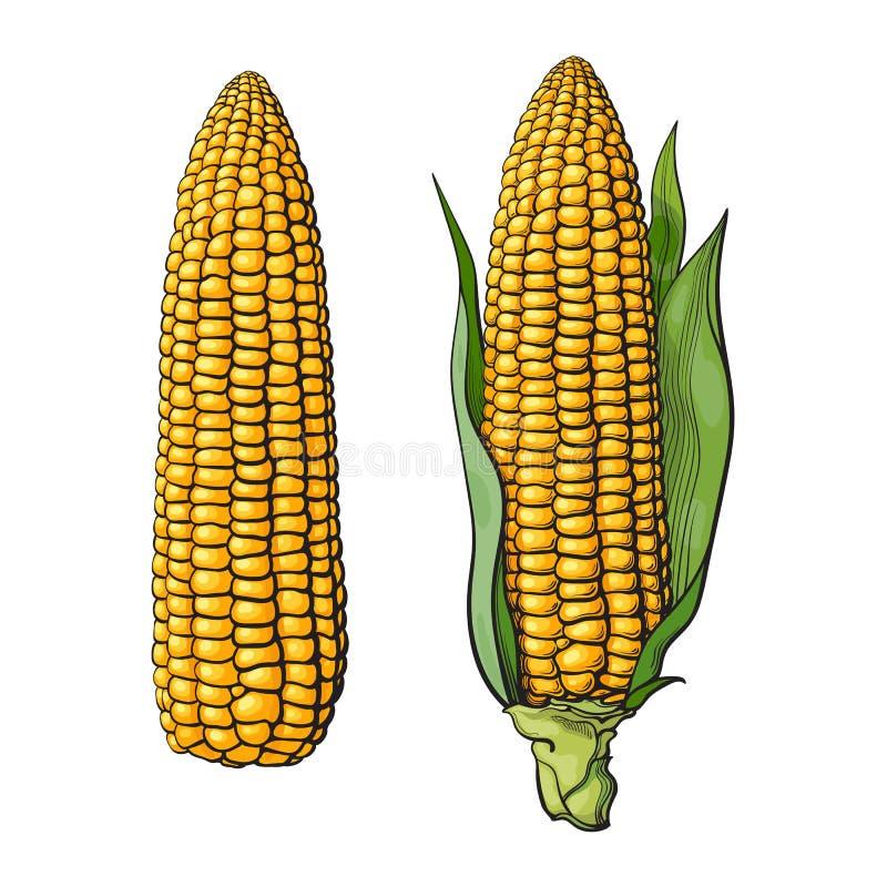 Ensemble d'épis de maïs mûrs illustration de vecteur