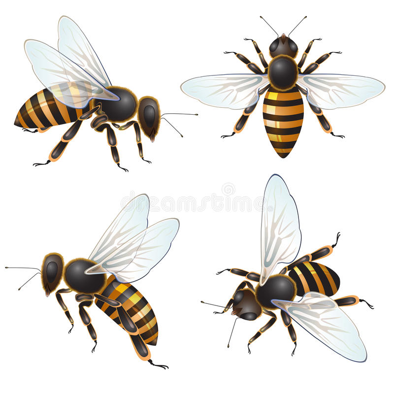 Ensemble d'abeille illustration stock