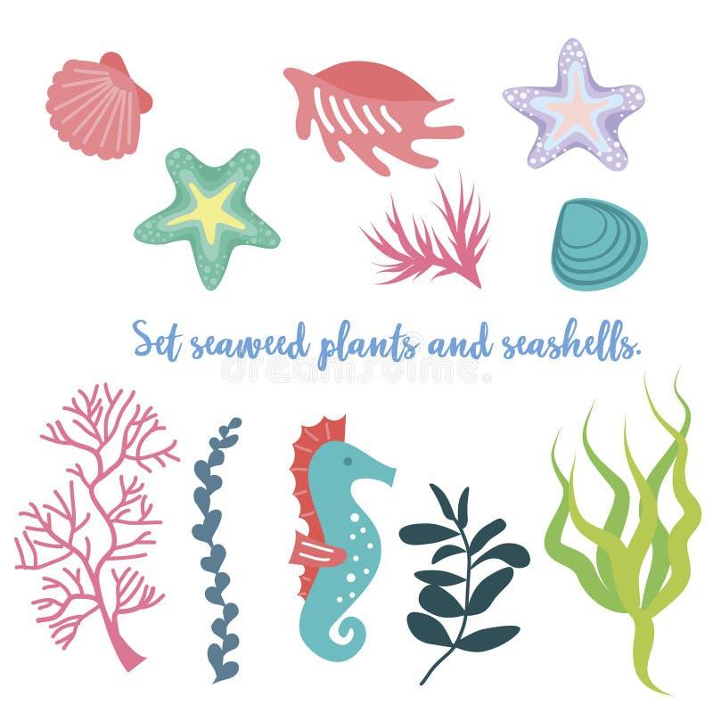 Ensemble d'algue, de corail et de coquilles illustration de vecteur