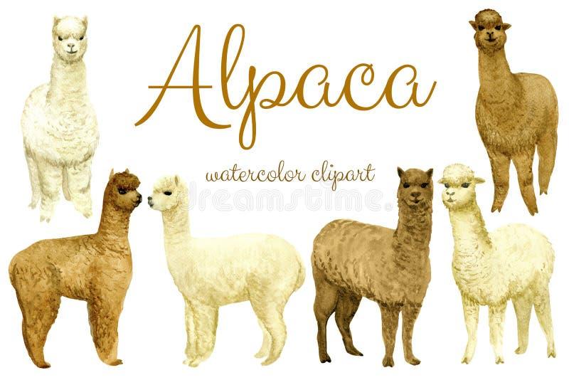 Ensemble d'alpaga illustration stock