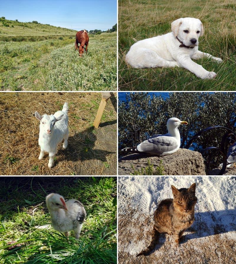 Ensemble d'animaux image libre de droits
