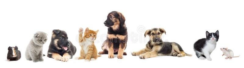 Ensemble d'animaux photo libre de droits