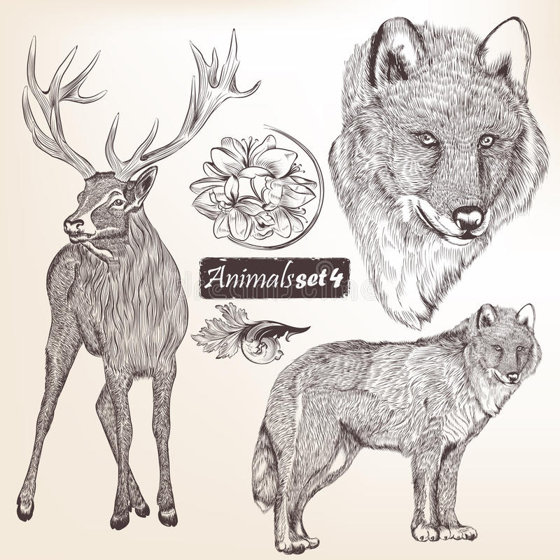Ensemble d'animaux détaillés tirés par la main de vecteur pour la conception illustration stock
