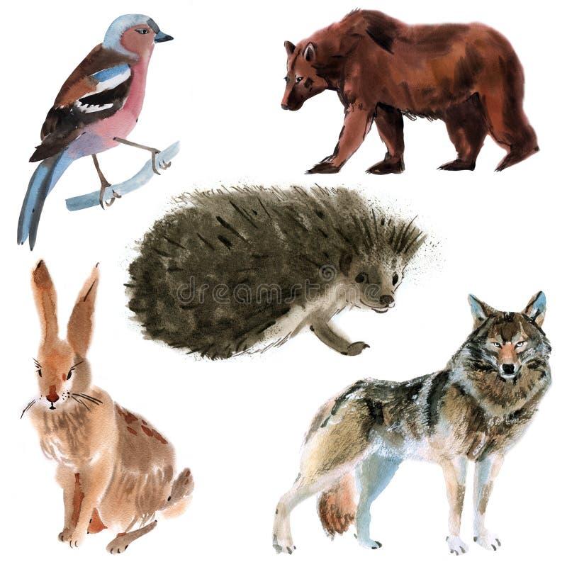 Ensemble d'animaux de forêt Illustration d'aquarelle à l'arrière-plan blanc illustration de vecteur