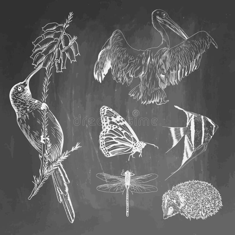 Ensemble d'animaux sur le fond de tableau Colibri, pélican, papillon, poisson, hérisson, croquis de libellule Vecteur illustration de vecteur