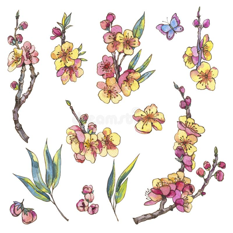 Ensemble d'aquarelle d'éléments naturels de ressort, fleurs de cru, bloo illustration libre de droits