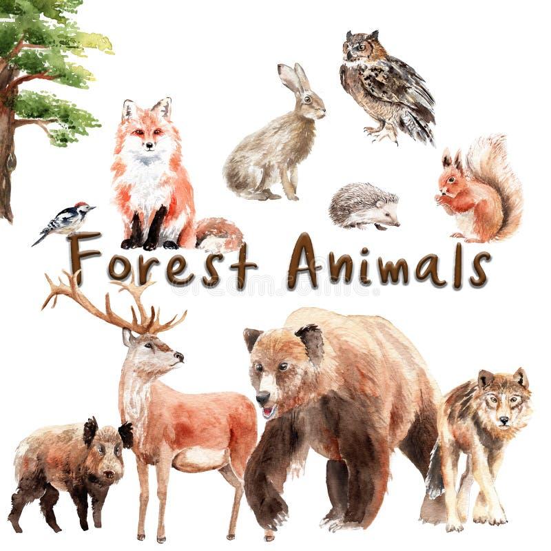 Ensemble d'aquarelle d'animaux de forêt : ensemble d'aquarelle d'animaux de forêt : ours, loup, renard, lièvre, hibou, verrat, ce illustration libre de droits