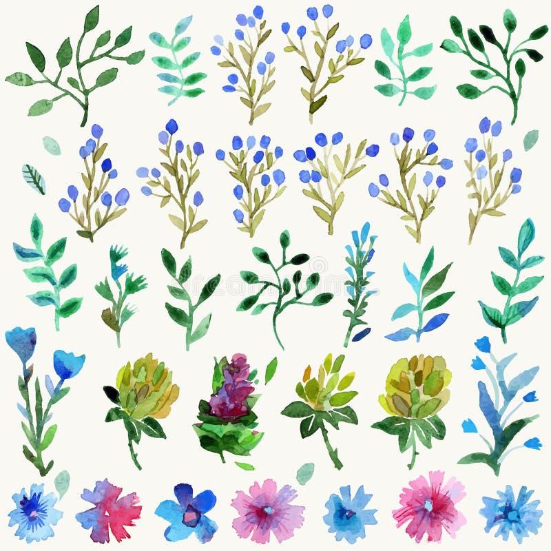 Ensemble d'aquarelle avec des feuilles et des fleurs Usine tirée par la main illustration stock