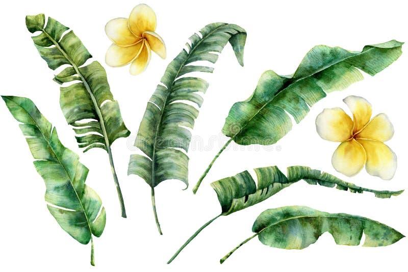 Ensemble d'aquarelle avec des feuilles et le plumeria de banane Brunch et frangipani tropicaux de paume de verdure peinte à la ma illustration de vecteur