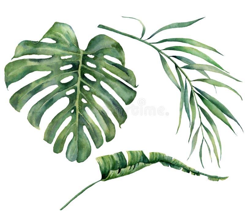 Ensemble d'aquarelle avec les feuilles tropicales d'arbre Branche exotique peinte à la main de verdure de monstera, de banane et  illustration libre de droits