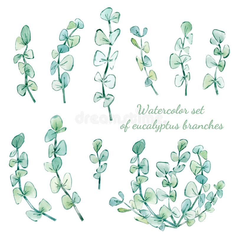 ensemble d'aquarelle de branches d'eucalyptus illustration stock