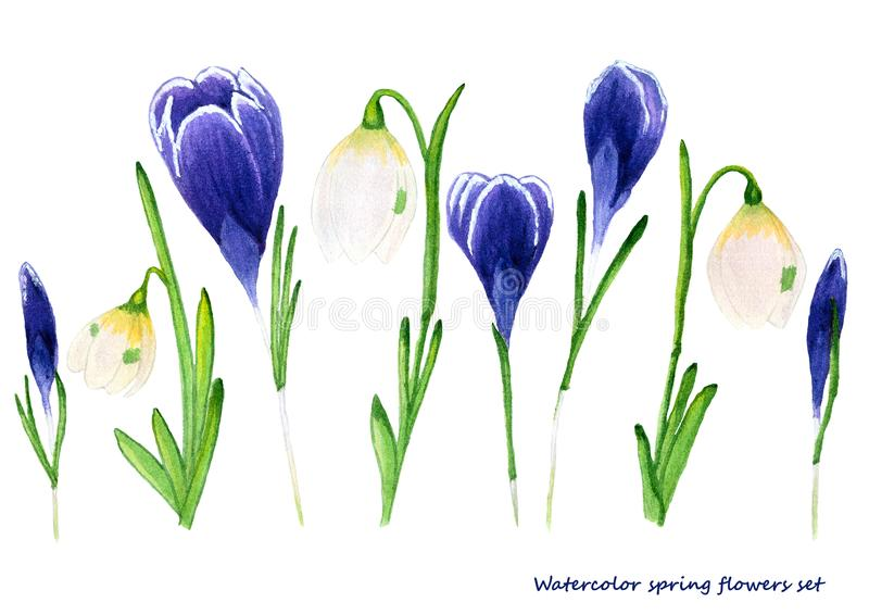 Ensemble d'aquarelle de fleurs de ressort Le crocus et le perce-neige conçoivent des éléments pour le fond, bannière, design de c illustration stock