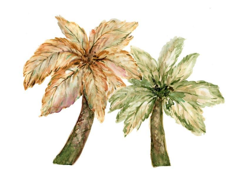 Ensemble d'aquarelle d'illustration brune de peinture de main d'arbre de noix de coco de paume de grrenand d'isolement sur le fon photographie stock libre de droits