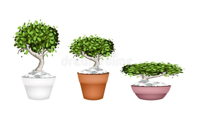 Ensemble d'arbre de bonsaïs dans des pots en céramique illustration libre de droits